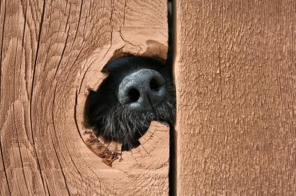 fencing-repairs-gate-repairs