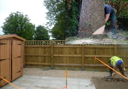 Tree-removal-service-durham.